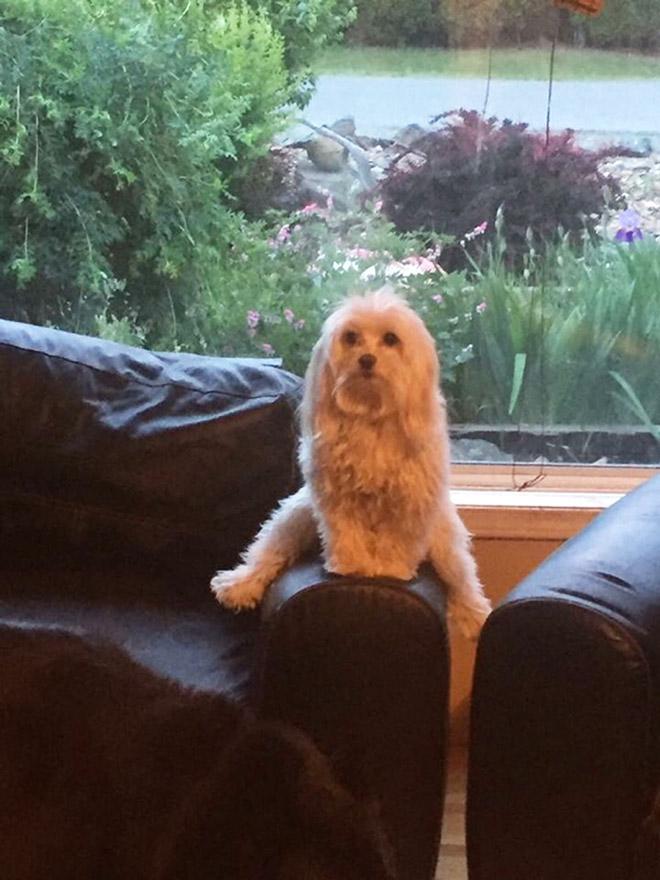 Awkwardly sitting dog.