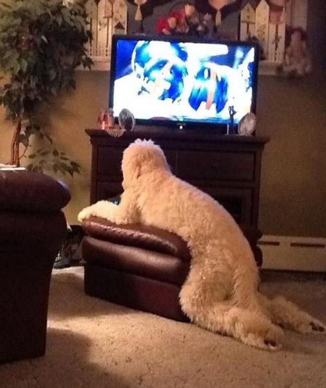 Funny sitting dog.