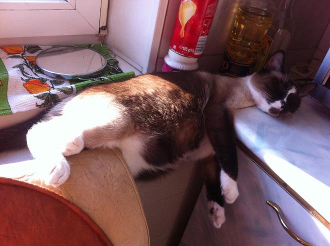 Funny sleeping cat.