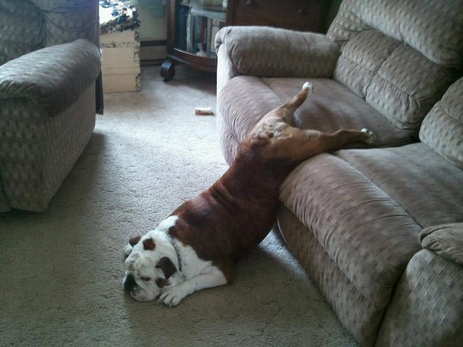 Dog vs. sofa.