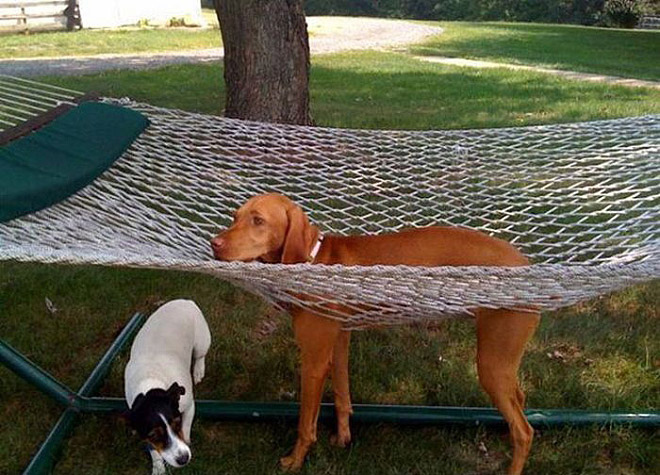 Funny dumb dog got stuck.