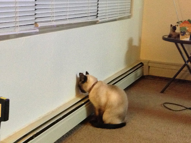 Some cats find walls to be confusing.