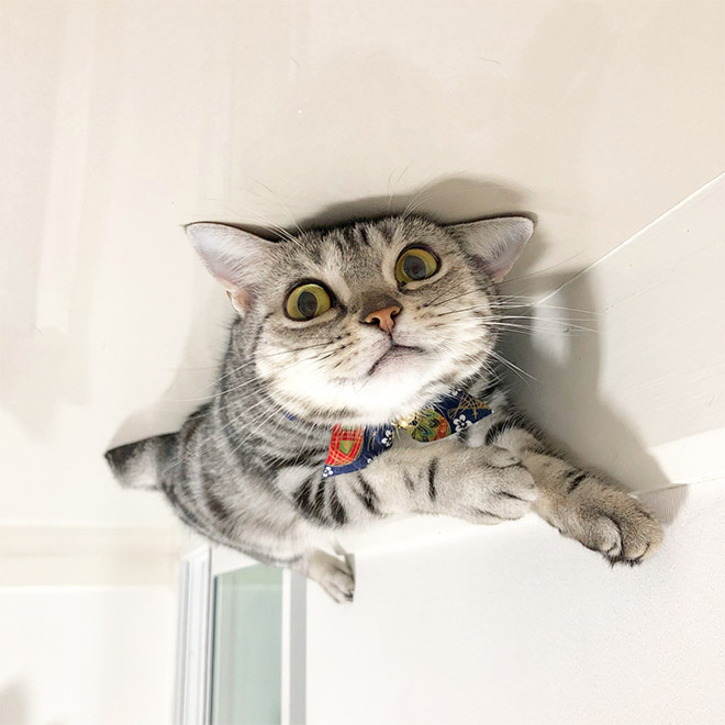 Balloon cat stuck to the ceiling.