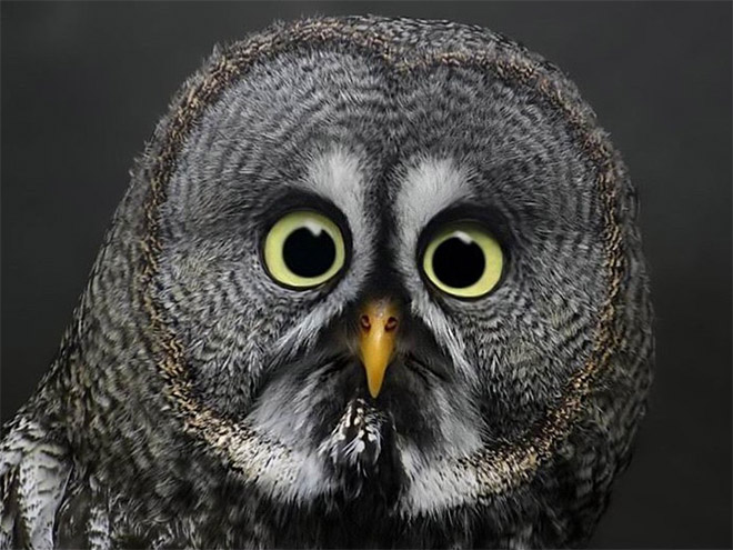 Shocked owl.