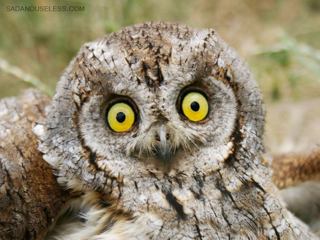 Really shocked owl.