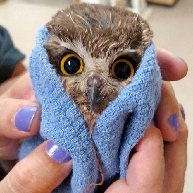 Tiny angry owl.