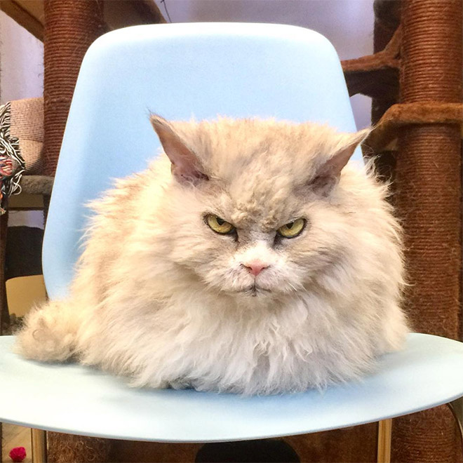 Grumpy cat is grumpy.