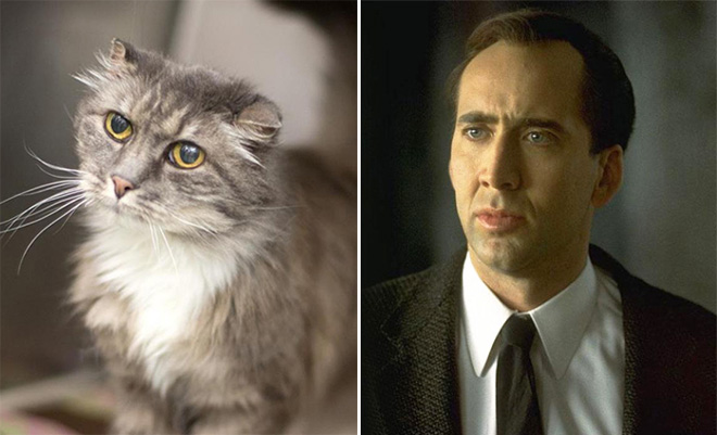 Nicolas Cage and his cat.