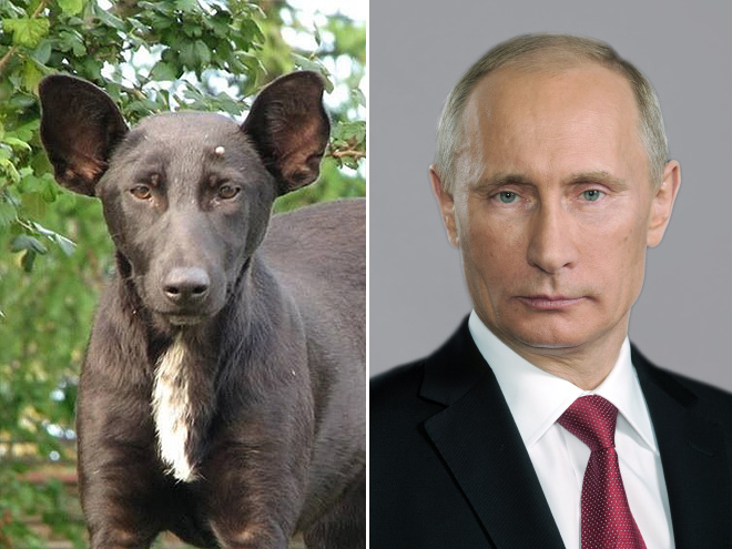 Putin and his dog.