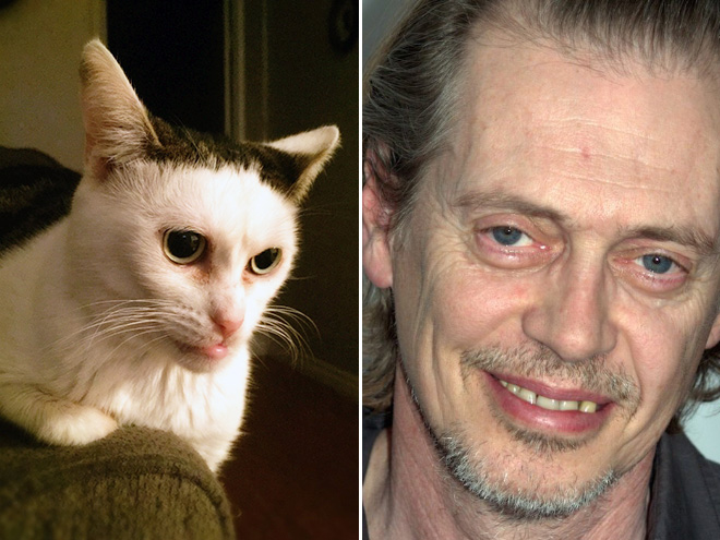 Steve Buscemi and his cat.