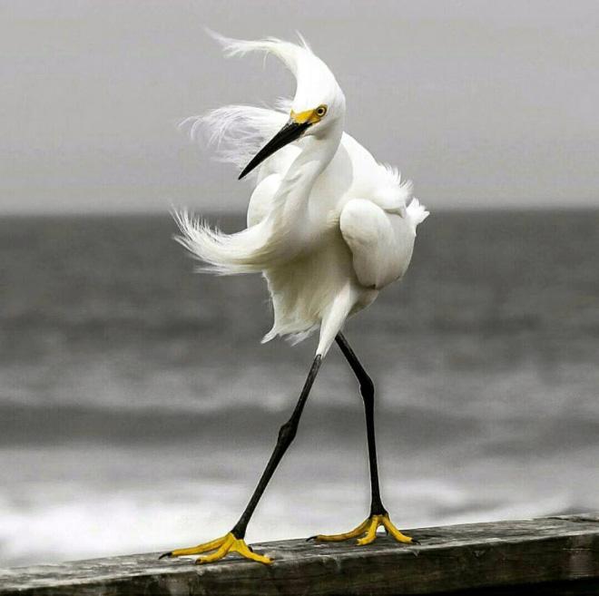 Bird walking in the wind.