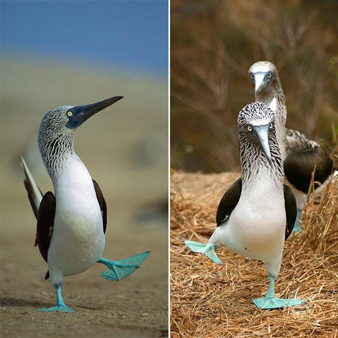 Funny walking birds.