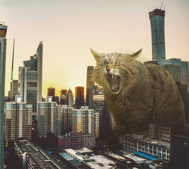 If giant cats lived among us?