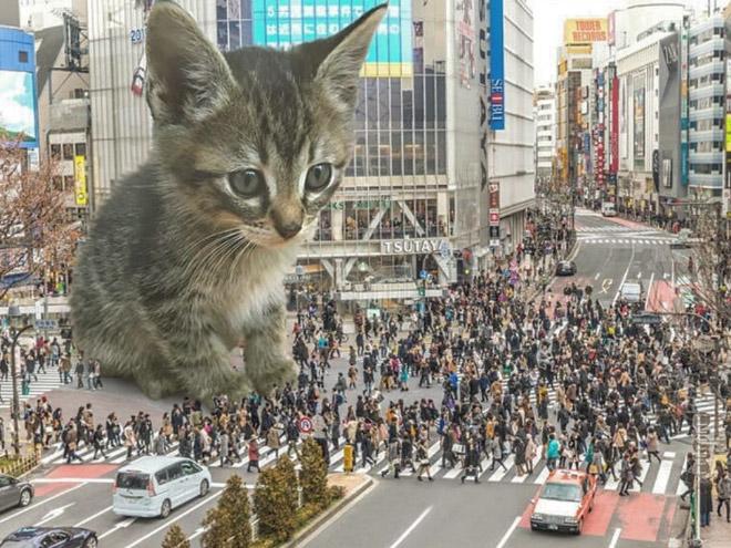 Giant kitten in the city.
