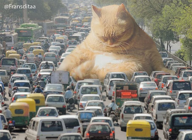 Giant cat messing up the traffic.