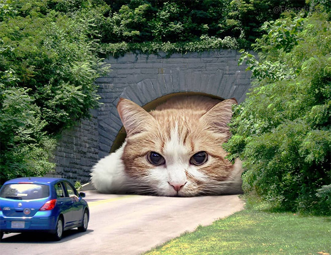 Giant cat blocking the tunnel entry.