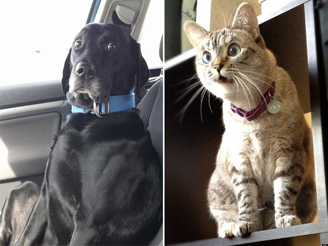 These pets are shocked about your poor life choices.