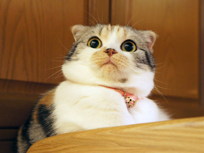 This cat is shocked about your poor life choices.