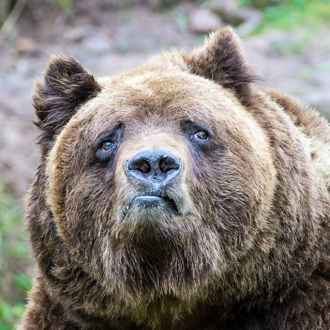 This bear is shocked about your poor life choices.
