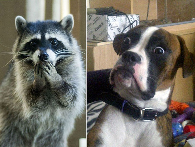 These animals are shocked about your poor life choices.