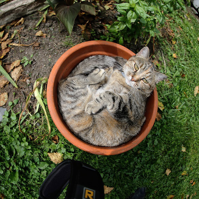 Remember, kids: you should never water a cat plant.