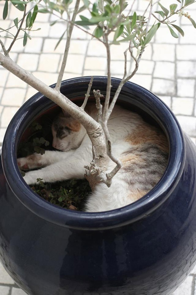 Cat plants in it's natural habitat.