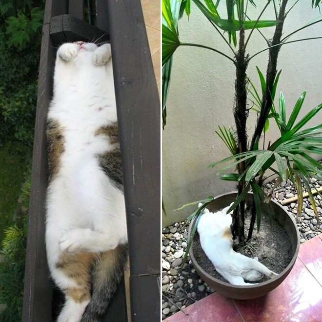 Cat plants you shouldn't water.