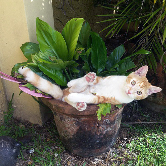 Cat plant you shouldn't water.