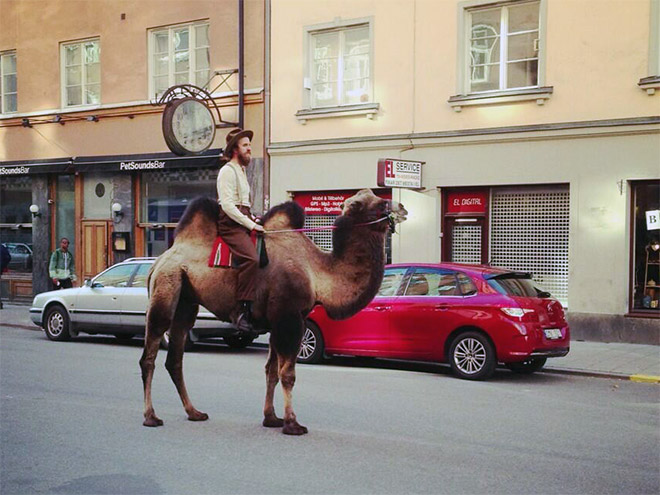 Have you ever seen a hipster on a camel. Now you have.
