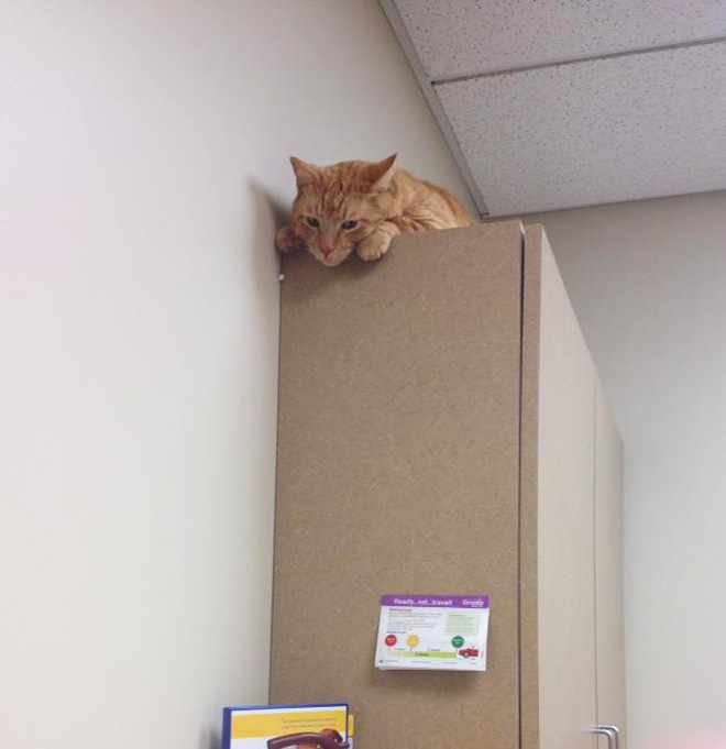 Poor cat hiding from the vet.