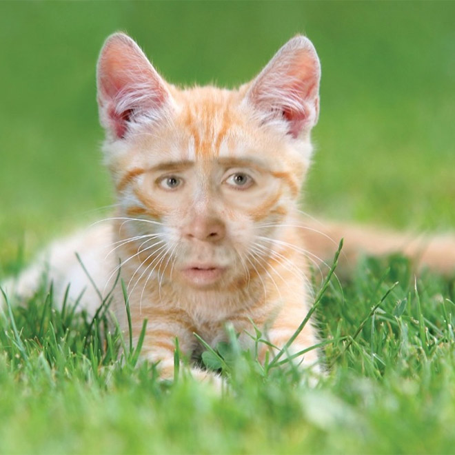 Meet Nicolas Catge: cat with Nicolas Cage's face.