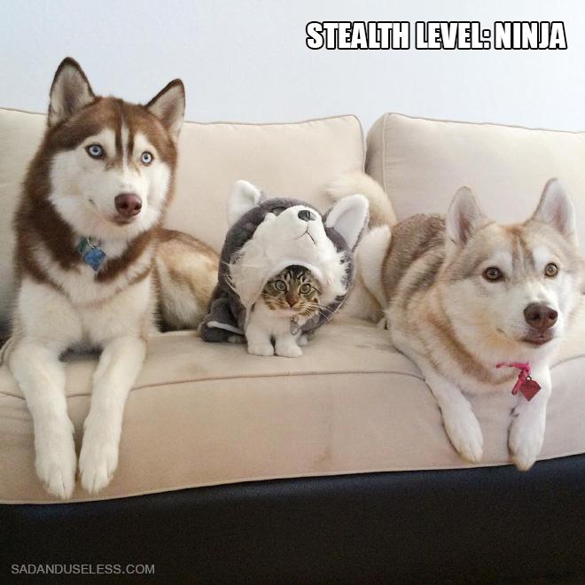 Stealth level: ninja.