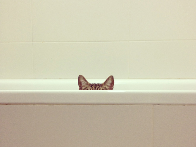 Ninja cat hiding and getting ready to attack.