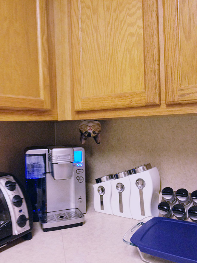 Ninja cat stalking his prey.