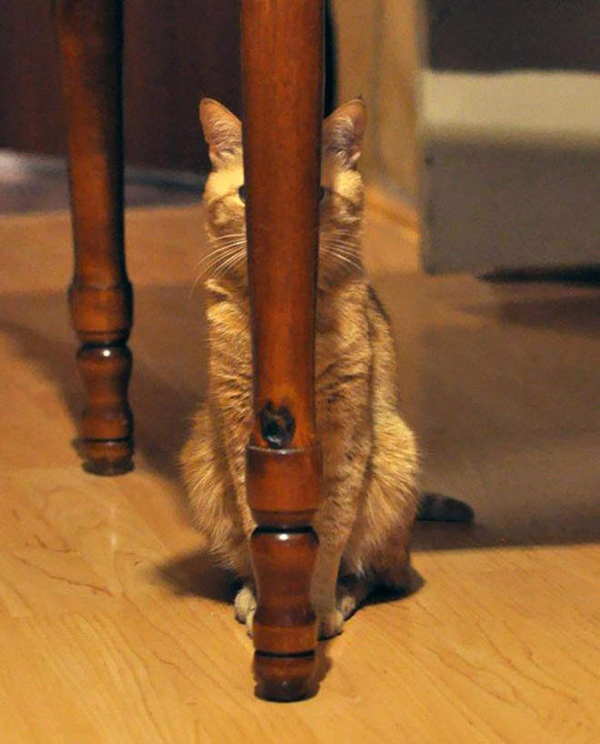 Perfectly hidden ninja cat.