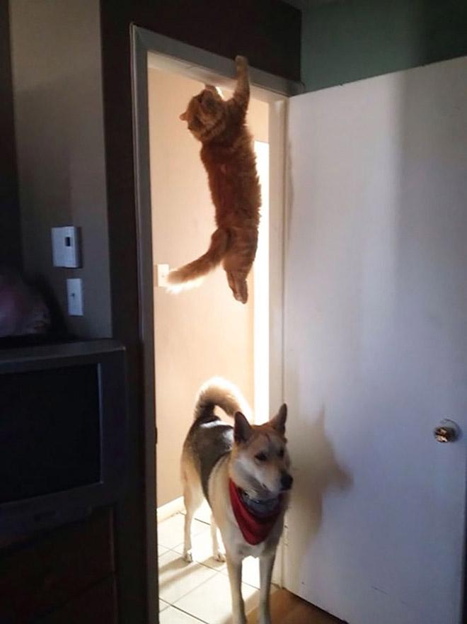 Ninja cat hiding from dog.