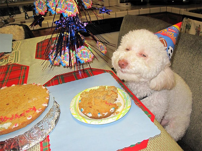 Dog celebrating his birthday.