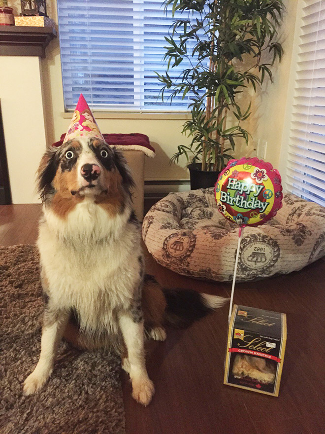 Dog super excited over his birthday.