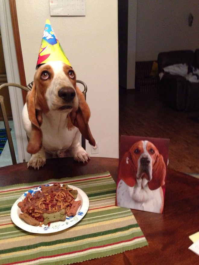 Dog having a birthday party.