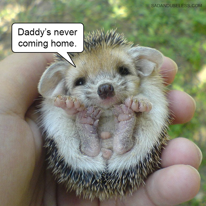 Deliver bad news is always better with a picture of baby animal.