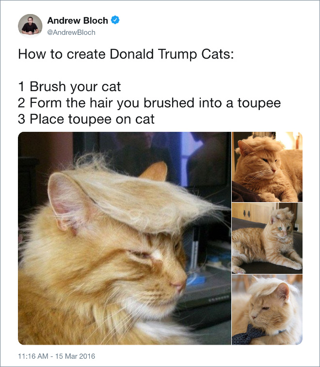 ow to create Donald Trump cats.