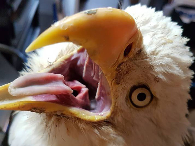 Bird mouths are terrifying!