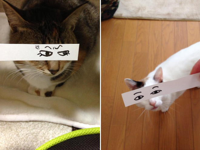 Cat with a cartoon eyes.