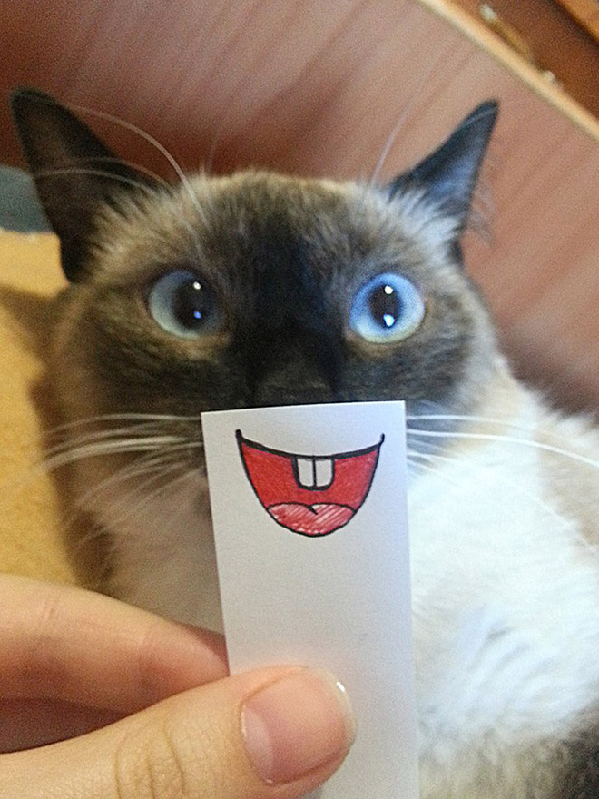 Cat with a cartoon mouth.