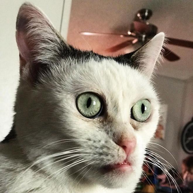 Cat that looks like Steve Buscemi.
