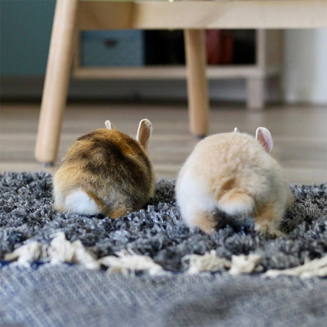 Adorable bunny butts.