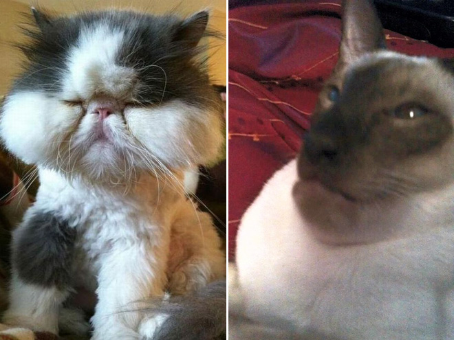 Кошка против пчелы. Результат.
