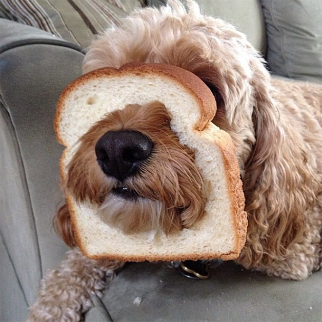 Dog breading.