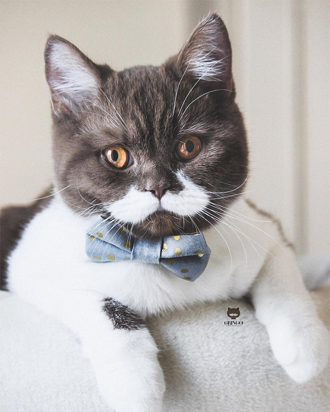This is Gringo: the mustached cat. He's awesome, right?