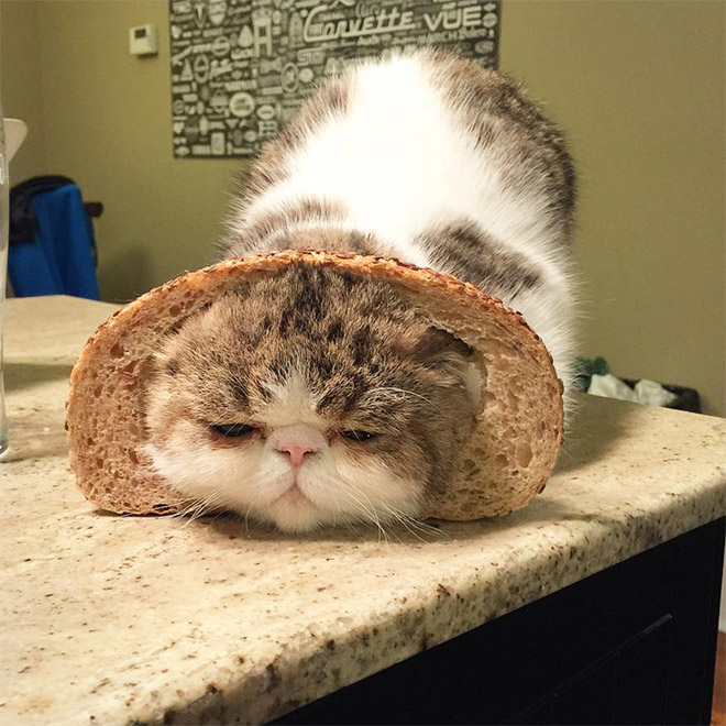 Cat breading.